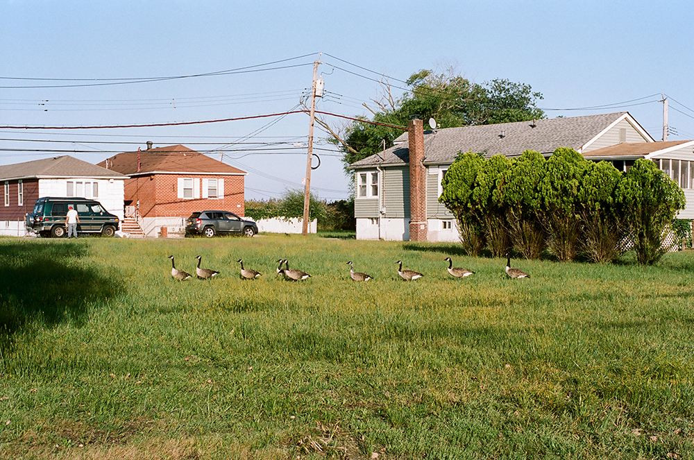 Image from a walk on Oakwood Beach, Staten Island, a community that has sold their homes to the State of New York in the aftermath of Hurricane Sandy, as an example of managed retreat from the shoreline. The neighborhood is returning to marshland, which will act as a buffer for residents inland.