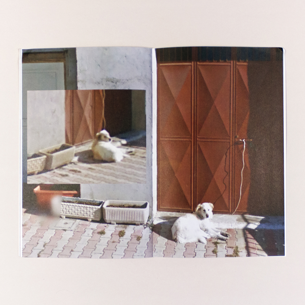 Attenti al Cane, Spread 16. A composite image of a dog resting in front of a door, tied to the door handle. On the recto, the dog stares directly at the viewer.